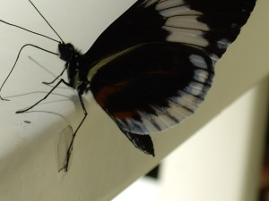 butterfly up close