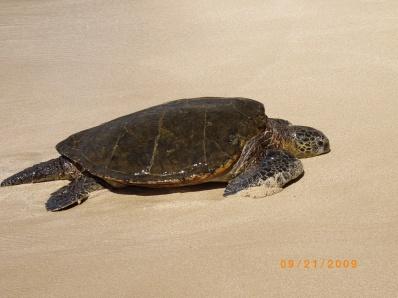 Hawaii - 9-20-09 - 9-26-09 036